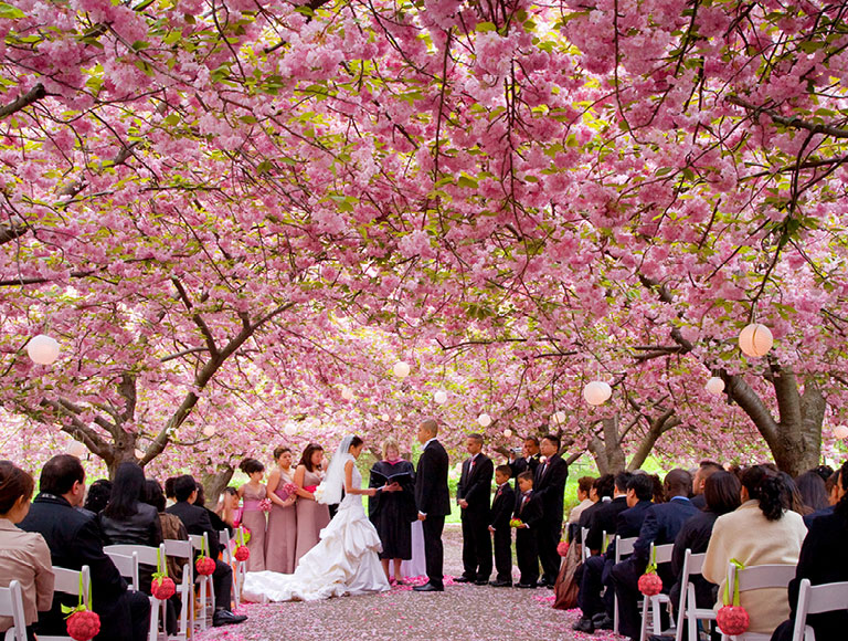 Patina events brooklyn botanic garden wedding - Brooklyn botanical garden wedding cost ...